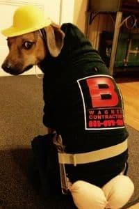 dog plumber costume